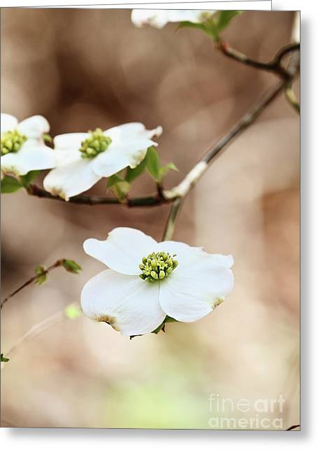 Greeting Card featuring the photograph White Flowering Dogwood Tree Blossom by Stephanie Frey