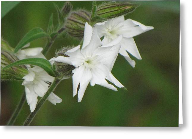 White Flowers Greeting Card by Sylvia Wanty