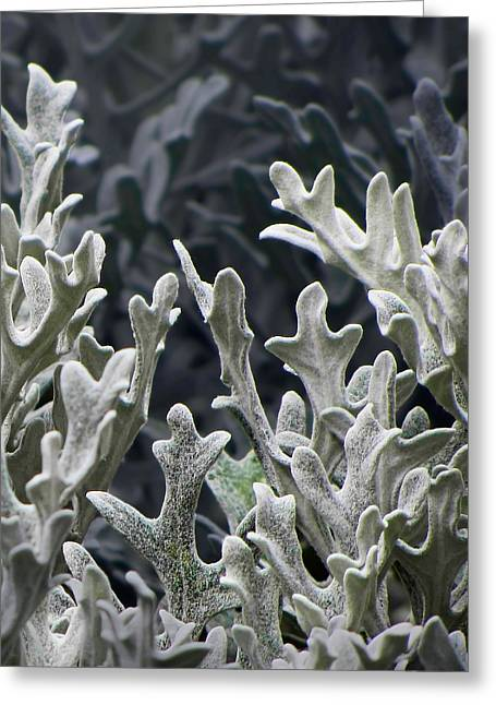 White Forest 2 Greeting Card by Michael Taggart II