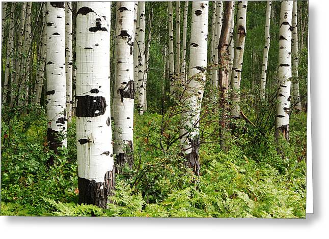 White Forest Greeting Card by Eric Foltz