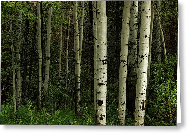 Greeting Card featuring the photograph White Forest by James BO Insogna