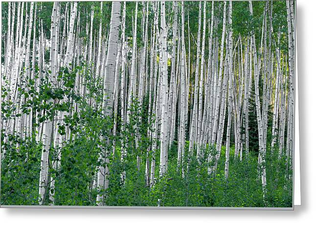 Greeting Card featuring the photograph White Forest by Tim Reaves