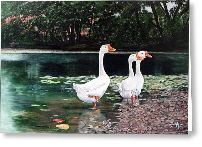 White Geese In Early Fall '07 Greeting Card