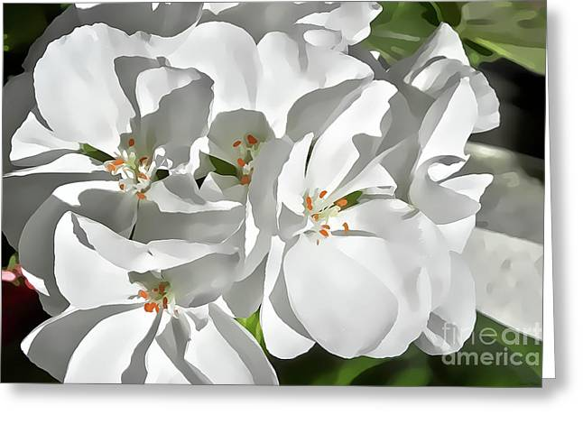 White Geraniums Greeting Card
