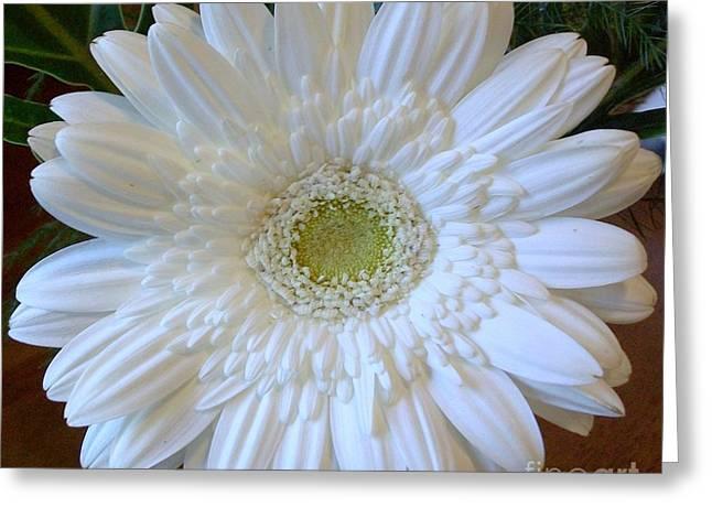White Gerber Beauty Greeting Card by Marsha Heiken