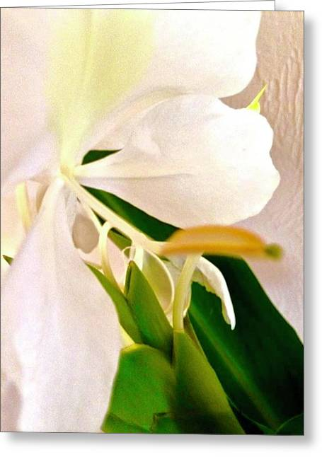 White Ginger Close Up Abstract Greeting Card