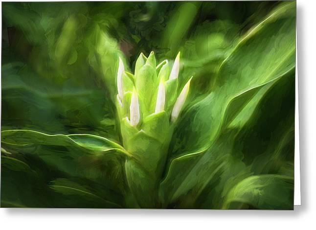 White Ginger Flowers H Coronarium Painted 003 Greeting Card