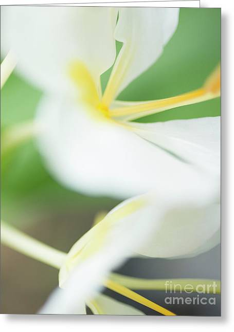 White Ginger Macro Greeting Card