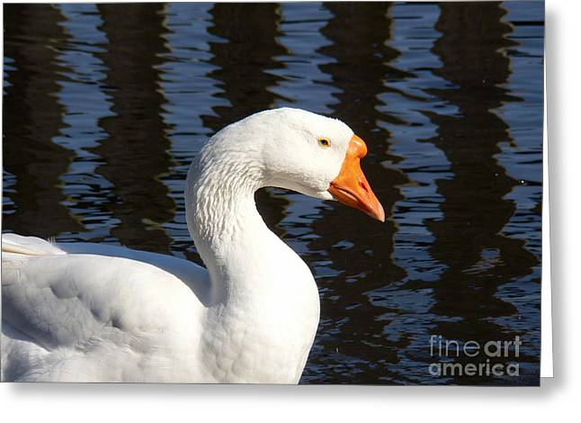 White Goose Greeting Card by Elizabeth Fontaine-Barr