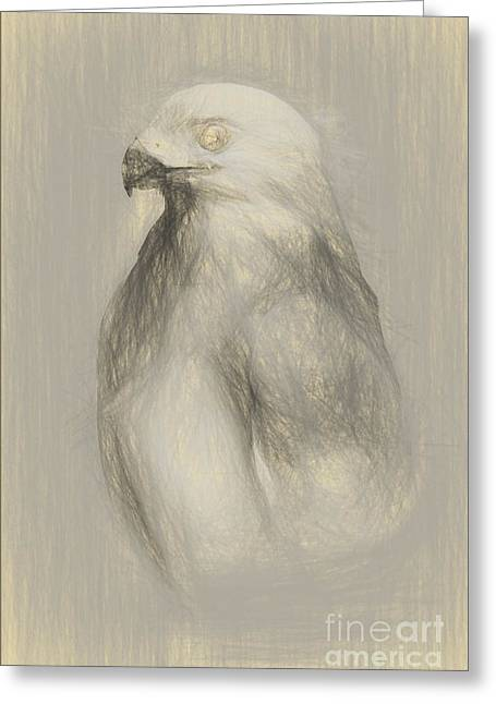 White Goshawk Artwork Greeting Card by Jorgo Photography - Wall Art Gallery