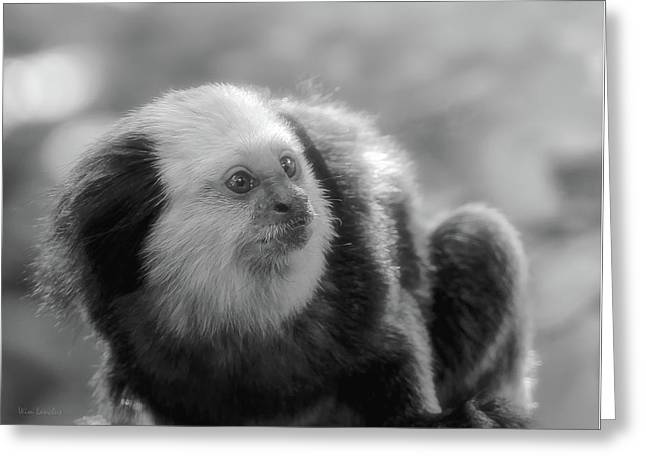 White-headed Marmoset Greeting Card by Wim Lanclus
