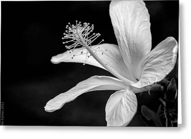 White Hibiscus Black And White Greeting Card by Debbie Karnes