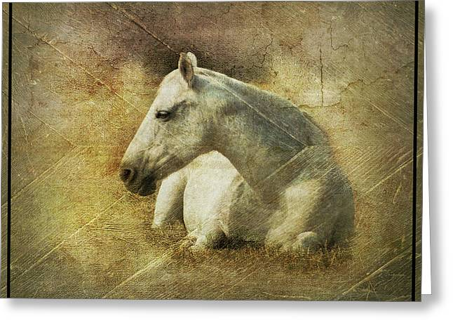 White Horse Art Greeting Card