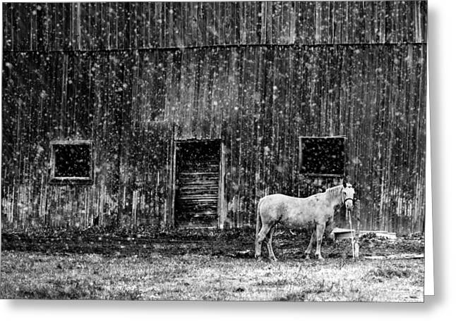 White Horse In A Snowstorm In Bw Greeting Card