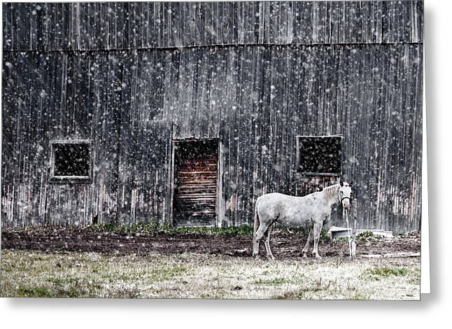 White Horse In A Snowstorm  Greeting Card by Maggie Terlecki