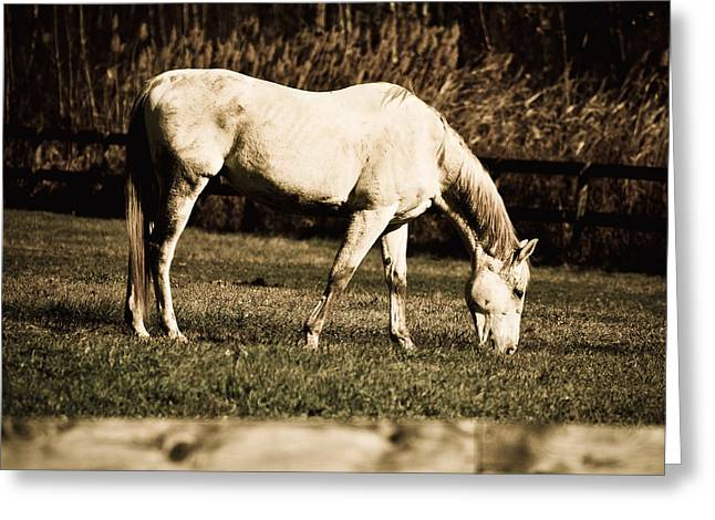 White Horse Greeting Card by Martin Rochefort