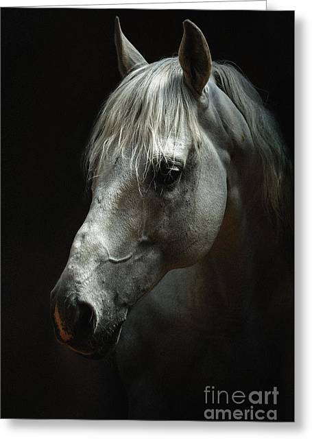 White Horse Portrait Greeting Card by Dimitar Hristov