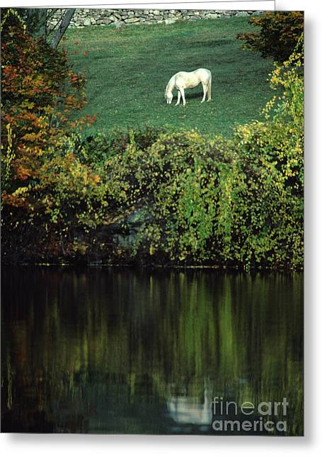 White Horse Reflected In Autumn Pond Greeting Card