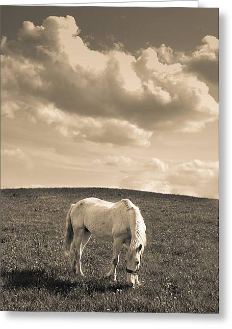 White Horse Greeting Card by Stanislovas Kairys