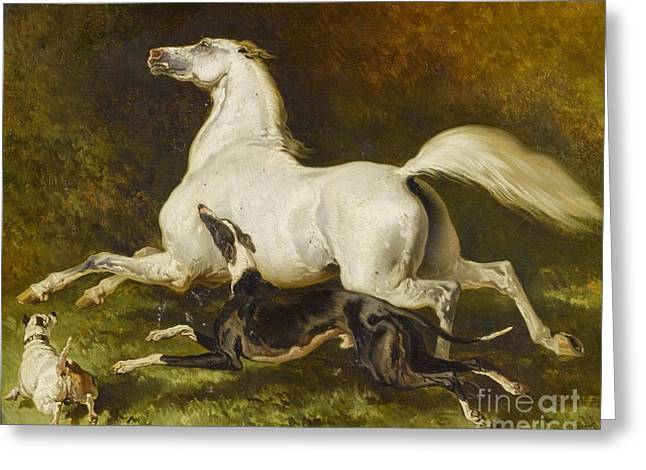 White Horse With Two Dogs Greeting Card