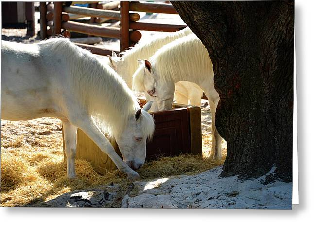 Greeting Card featuring the photograph White Horses Feeding by David Lee Thompson