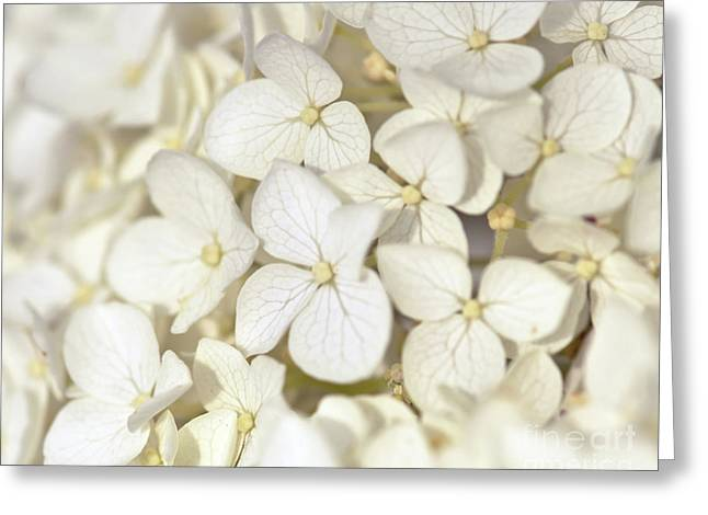 Greeting Card featuring the photograph White Hydrangea by Kerri Farley