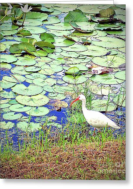 White Ibis Amongst Lillies Greeting Card by Chris Andruskiewicz