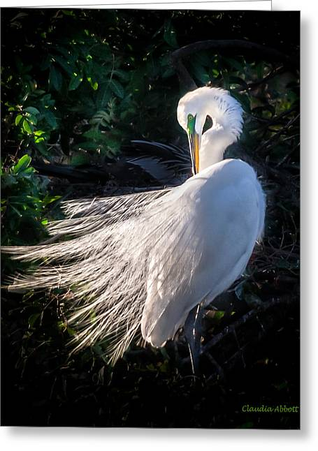 Egret In Wedding Feathers Greeting Card
