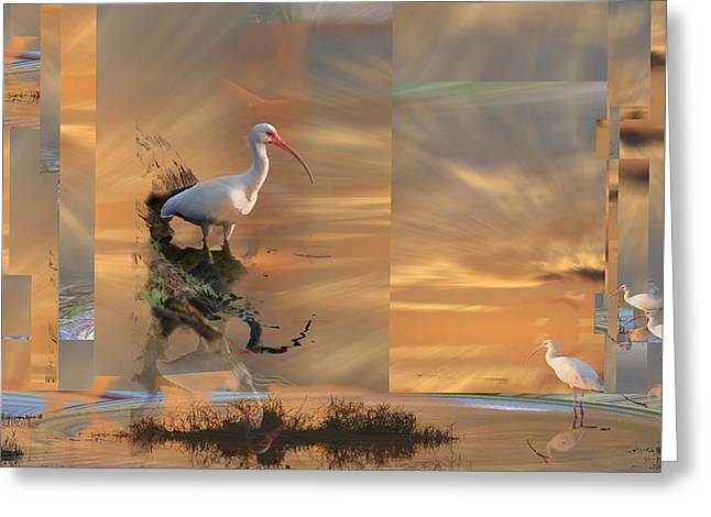 White Ibis In Abstract Greeting Card