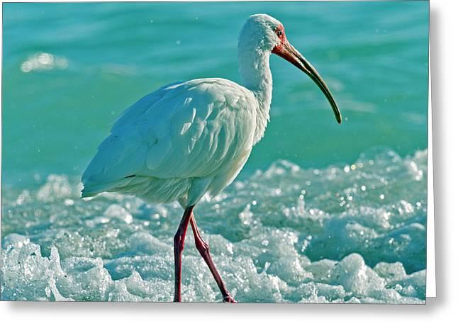 White Ibis Paradise Greeting Card