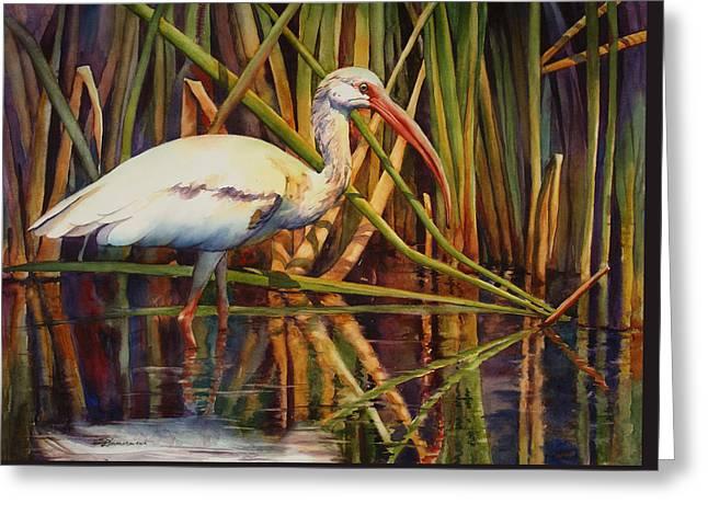 White Ibis Greeting Card by Sue Zimmermann