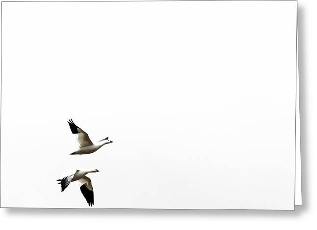 White In Flight Greeting Card