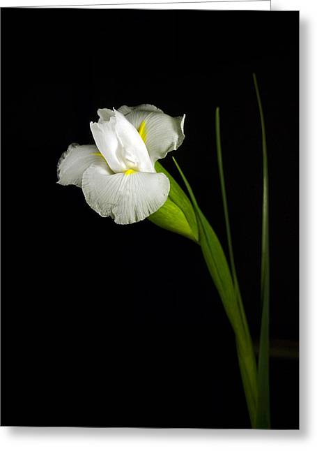 Greeting Card featuring the photograph White Iris by Elsa Marie Santoro