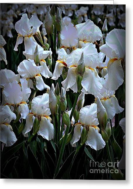 White Iris Garden Greeting Card