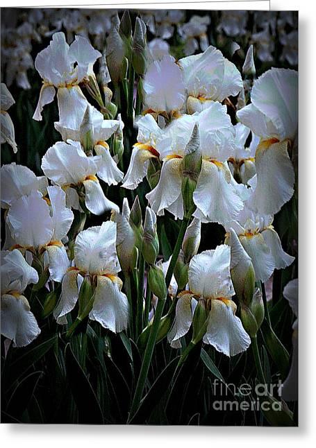 White Iris Garden Greeting Card