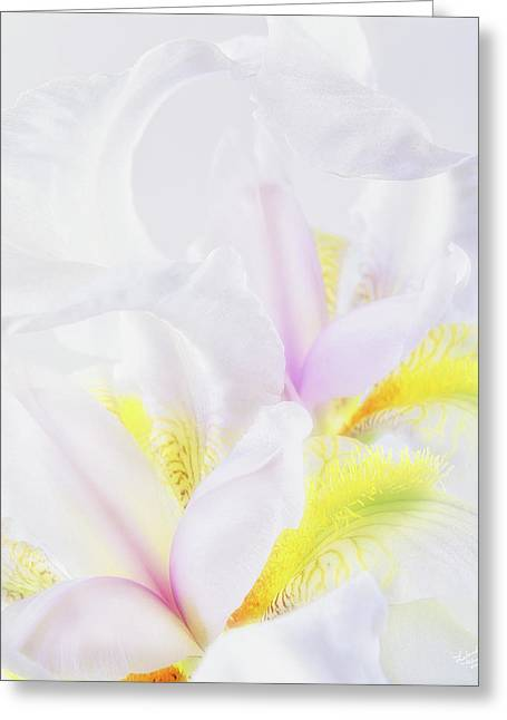 White Iris Greeting Card by Leland D Howard