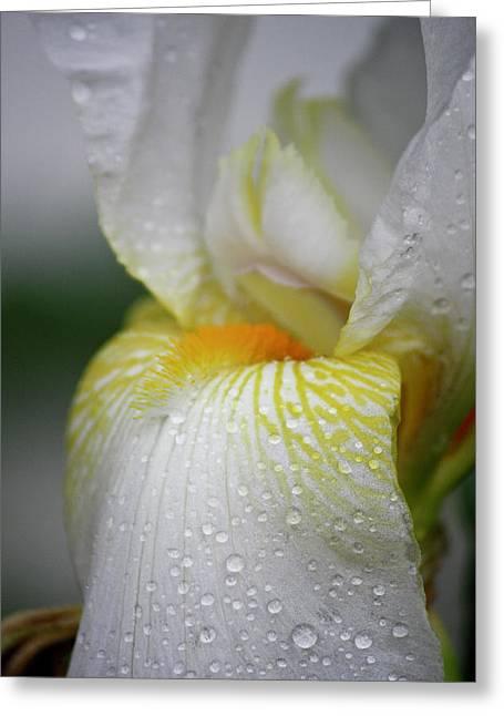 White Iris Study No 7 Greeting Card by Teresa Mucha