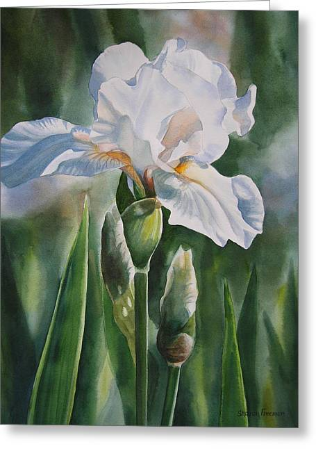 White Paintings Greeting Cards - White Iris with Bud Greeting Card by Sharon Freeman