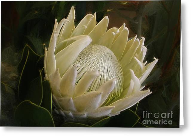White King Protea By Kaye Menner Greeting Card