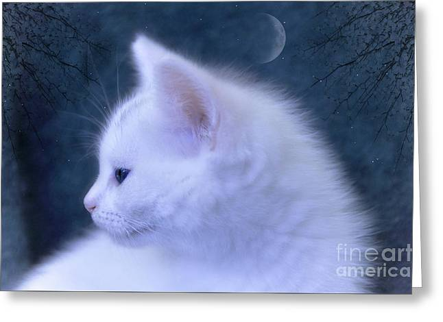 White Kitten At Night Greeting Card