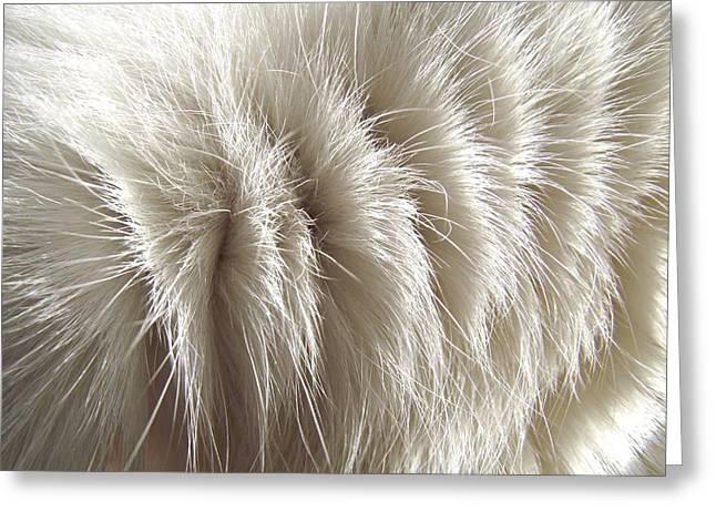 'white Kitty Fur' Greeting Card
