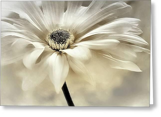 Greeting Card featuring the photograph White Lights by Darlene Kwiatkowski