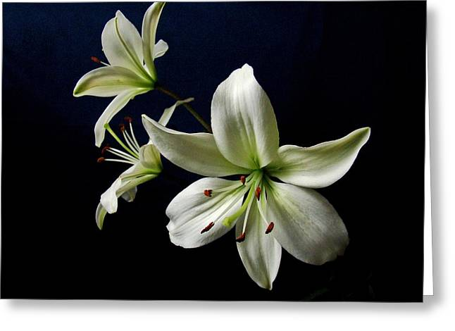 White Lilies On Blue Greeting Card by Sandy Keeton
