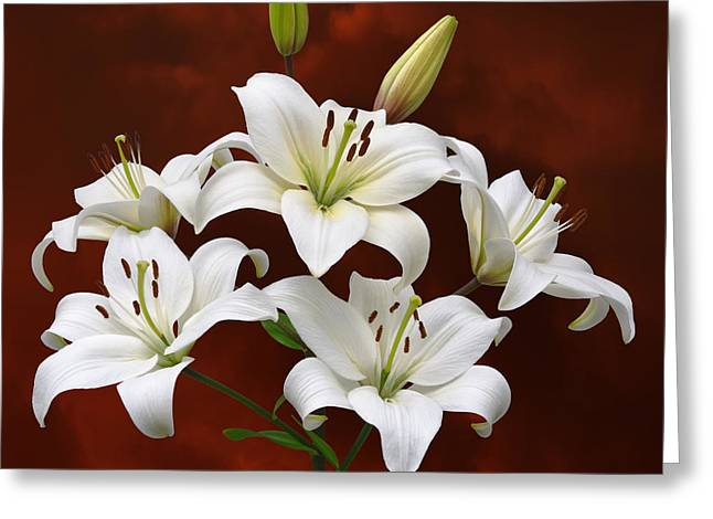 White Lilies On Red Greeting Card by Jane McIlroy