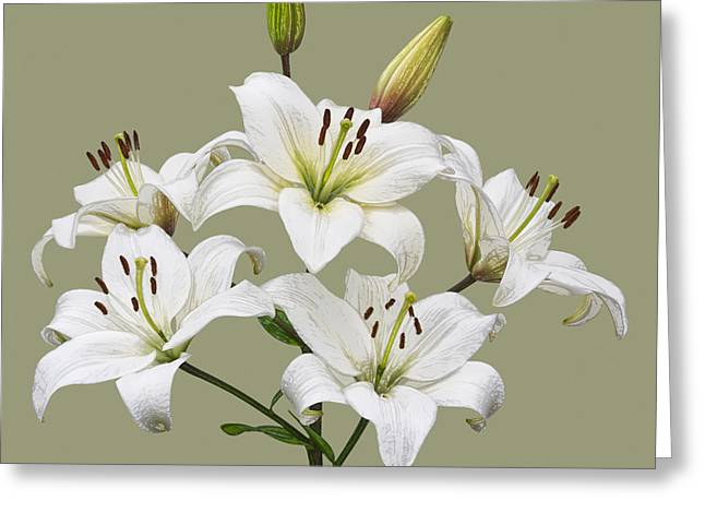 White Lilies Illustration Greeting Card by Jane McIlroy