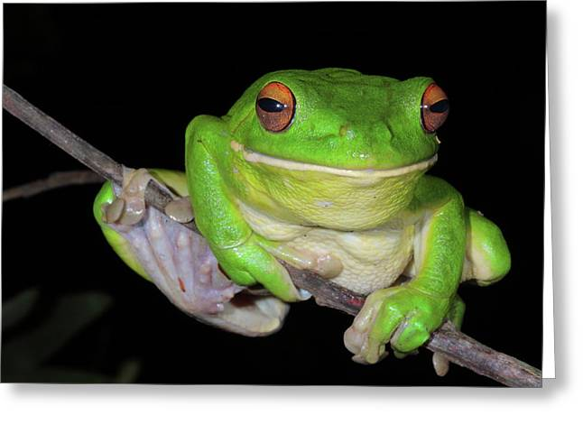 White-lipped Tree Frog Greeting Card by Bruce J Robinson
