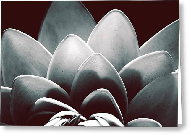 White Lotus At Dawn Greeting Card