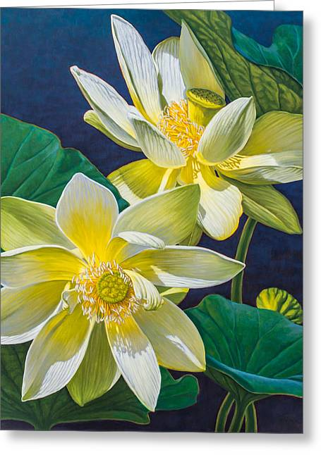 White Lotuses 1 Greeting Card by Fiona Craig