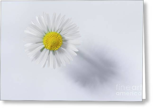 White Greeting Card by Masako Metz