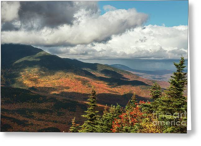 Greeting Card featuring the photograph White Mountain Foliage by Sharon Seaward